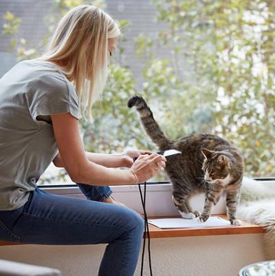 Frau am Smartphone - Katze streicht um sie herum