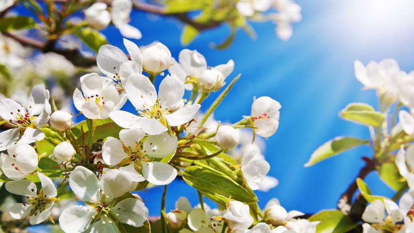 Alerte aux pollens – que m'arrive-t-il?